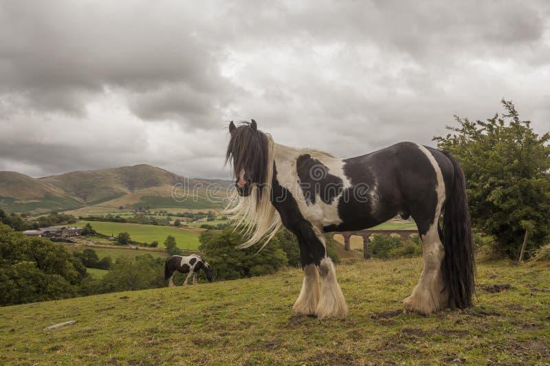 Ландшафт лошади тележки стоковые фотографии rf