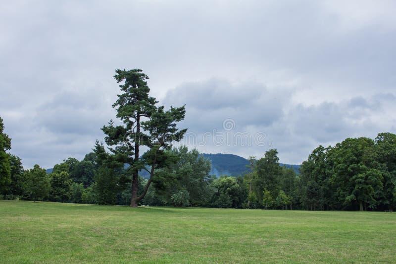 ландшафт луга гор с лесом на предпосылке стоковые фотографии rf