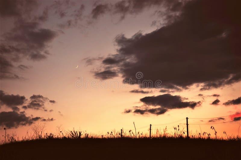 Ландшафт молодого месяца и электрического поляка с проводами в поле на заходе солнца стоковое изображение rf