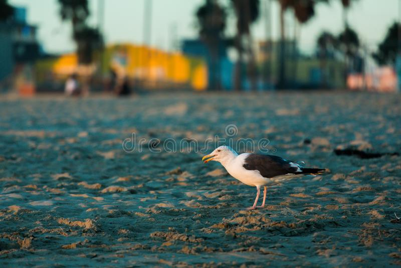 Ландшафт на пляже Венеции, с чайкой стоковые фото