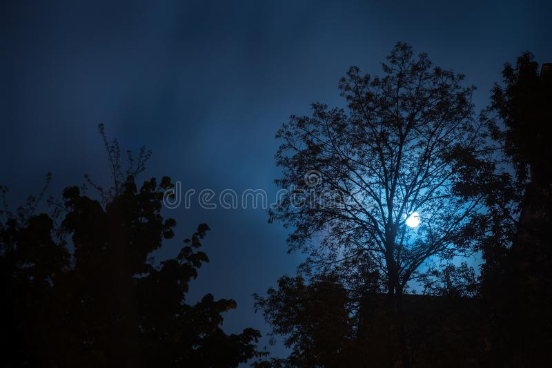 Ландшафт ночи с силуэтами деревьев и полнолуния стоковые изображения rf