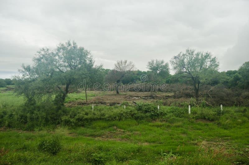 Ландшафт обезлесения естественного леса, контраста жизни и смерти флоры и фауны стоковое фото rf