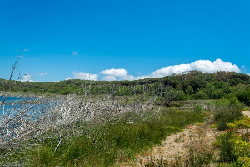Ландшафт озера Baratz стоковое фото rf
