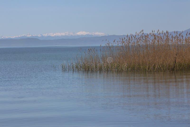 Ландшафт озера Ohrid с тростниками Struga, северная Македония стоковое фото rf
