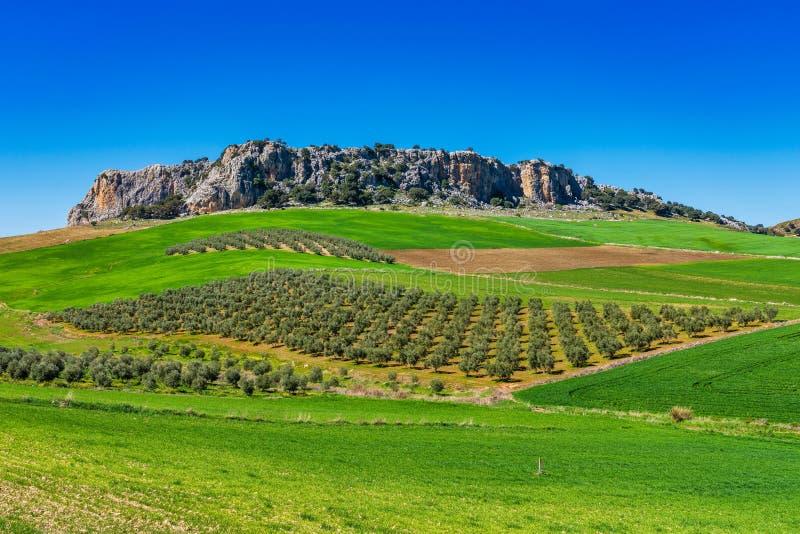 Ландшафт около Cuevas del Becerro в провинции Малага, Андалусии, Испании стоковое фото