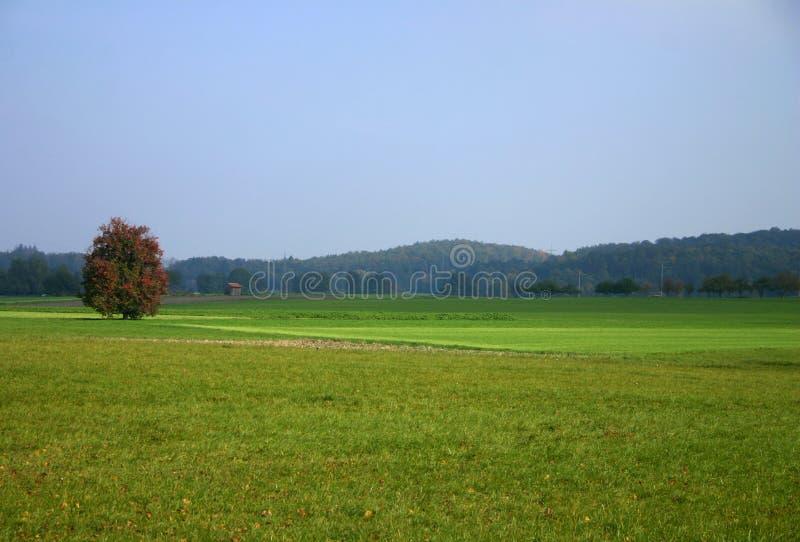 ландшафт октябрь стоковые изображения rf