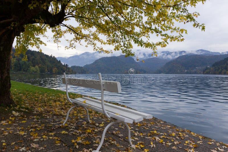 Ландшафт осени Белый стенд озером Bled стоковое фото