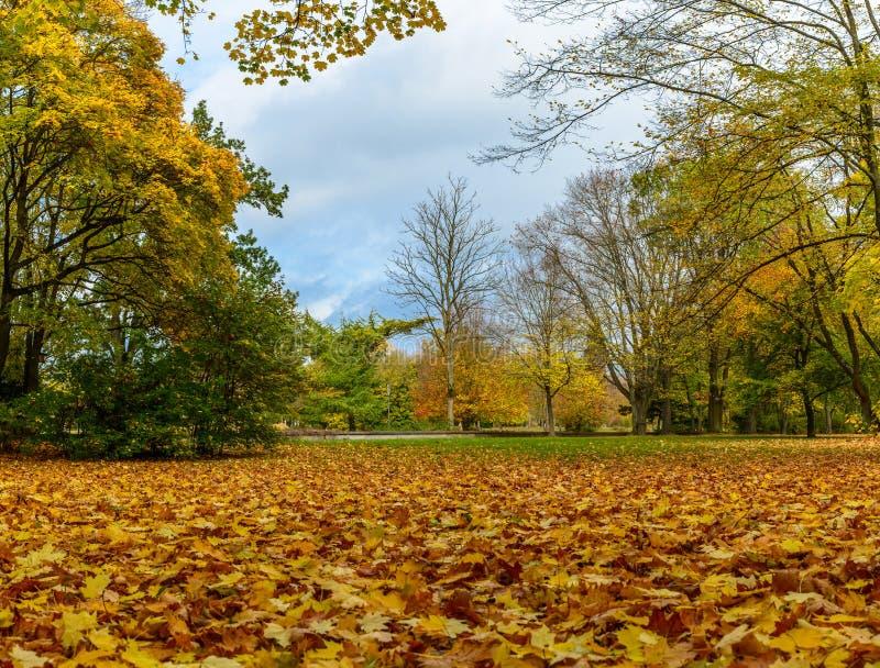 Ландшафт осени в парке в Нюрнберге стоковое фото