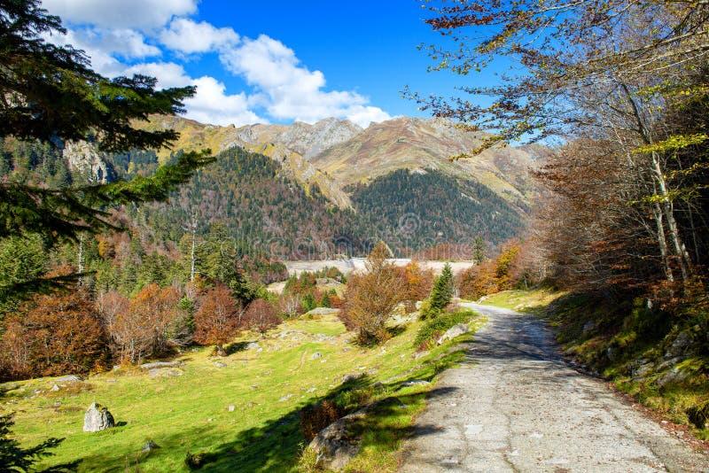 Ландшафт осени горы с цветастой пущей стоковое фото rf