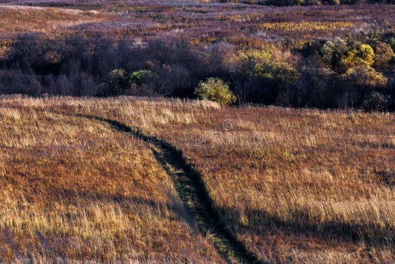 Ландшафт осени Западный Сибирь, Россия стоковое изображение rf