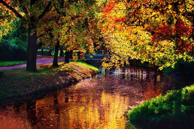Ландшафт осени Золотая сцена осени в парке с падая пастбищем стоковые фотографии rf