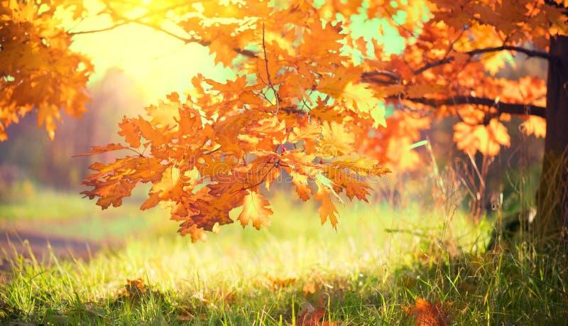 Ландшафт осени падение Красочные листья на дубе в осеннем парке стоковое фото