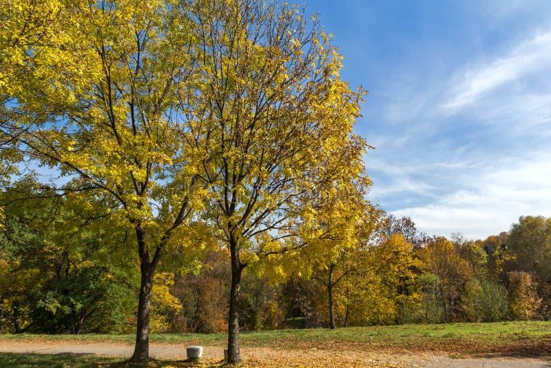 Ландшафт осени с желтыми деревьями в южном парке в городе Софии, Болгарии стоковое изображение rf