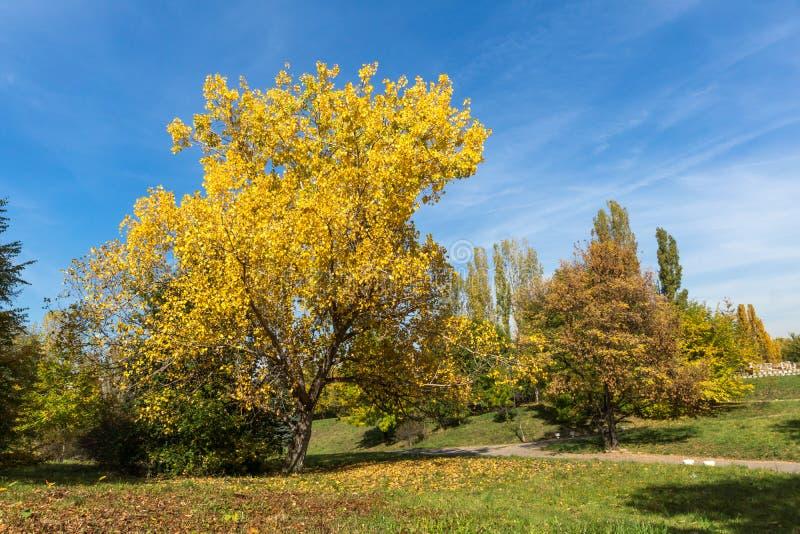 Ландшафт осени с желтыми деревьями в южном парке, Софии, Болгарии стоковые изображения