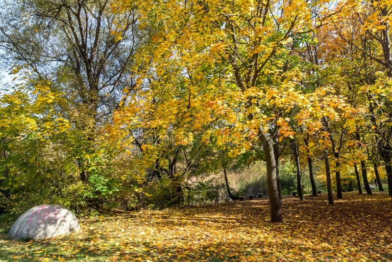 Ландшафт осени с желтыми деревьями в южном парке, Софии, Болгарии стоковое фото rf