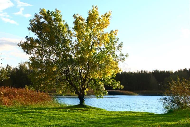 Ландшафт осени с озером стоковая фотография