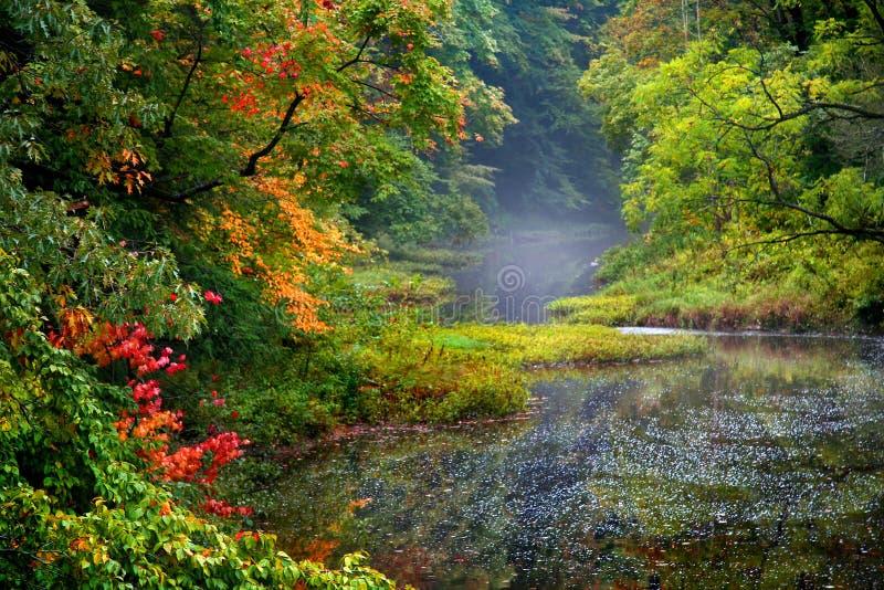 ландшафт осени туманный стоковое изображение
