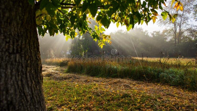 Ландшафт осени утра на луге в сельской местности Изумляя красивый ландшафт стоковое изображение rf