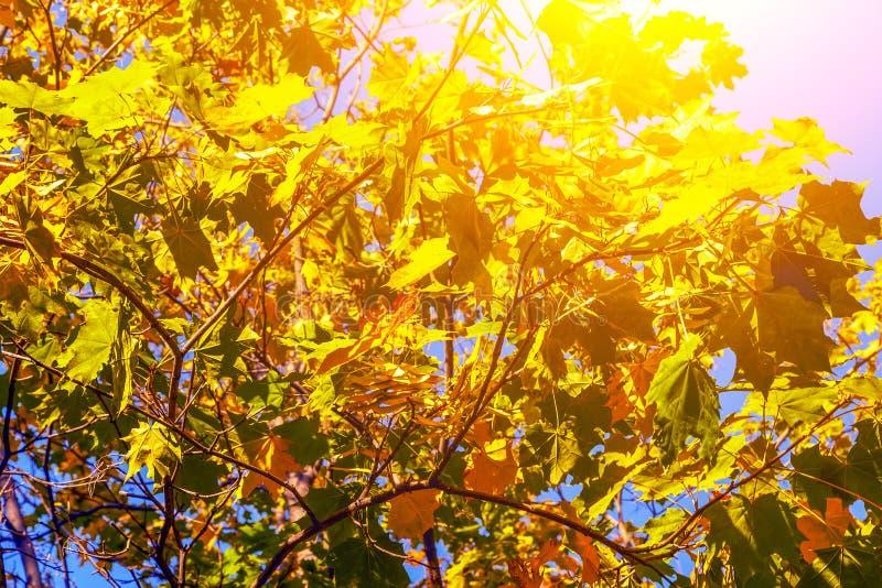 Ландшафт осени Leafes дуба осени, очень отмелый фокус стоковое изображение
