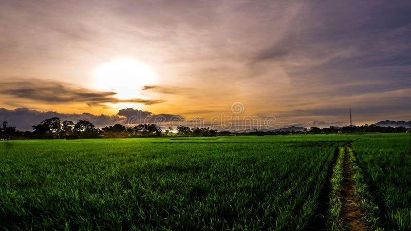 Ландшафт от фермы Cililin, западной Ява, Индонезии стоковые фотографии rf