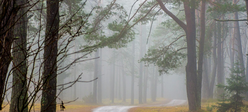 Ландшафт падения в рассвете леса, панораме стоковые фото