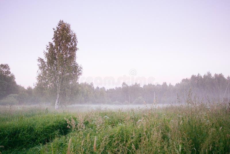 Ландшафт падения осени над полями с туманом treetops видимым сквозным стоковое изображение