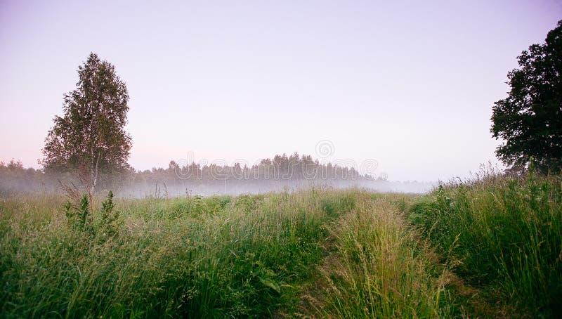 Ландшафт падения осени над полями с туманом treetops видимым сквозным стоковая фотография