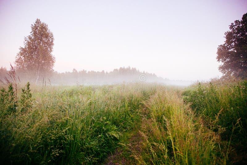 Ландшафт падения осени над полями с туманом treetops видимым сквозным стоковое фото rf