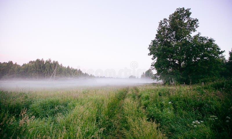 Ландшафт падения осени над полями с туманом treetops видимым сквозным стоковые фотографии rf