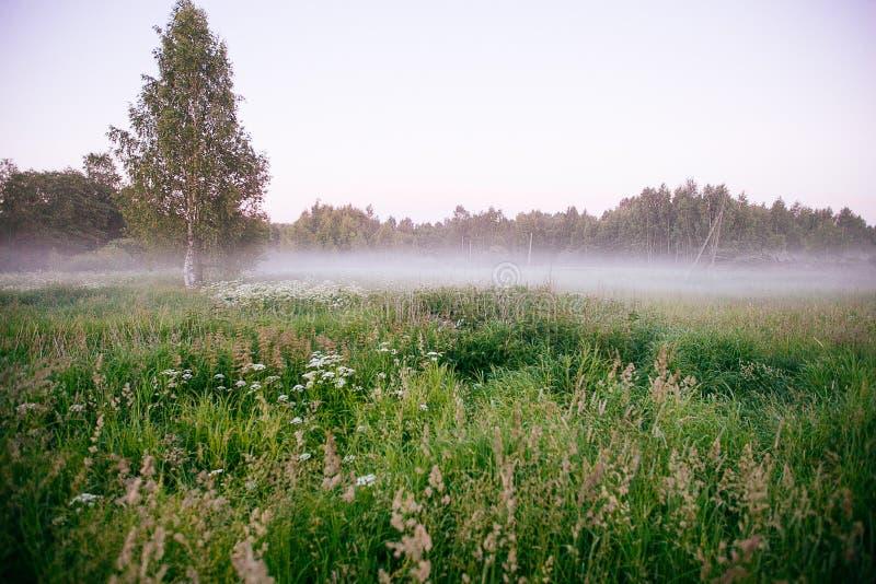 Ландшафт падения осени над полями с туманом treetops видимым сквозным стоковое фото