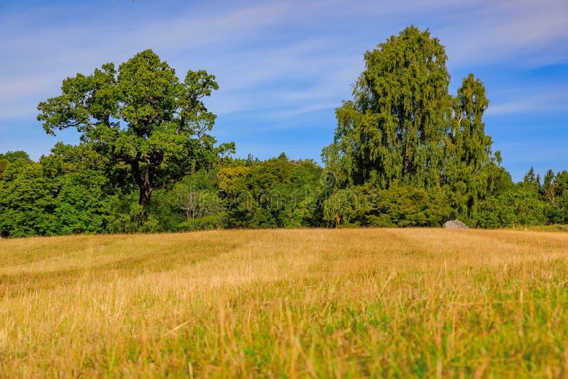 Ландшафт падения с полями желтой травы и зеленого цвета выходит на t стоковые фотографии rf