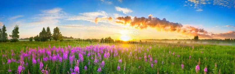 Ландшафт панорамы сельский с восходом солнца и blossoming лугом стоковое фото