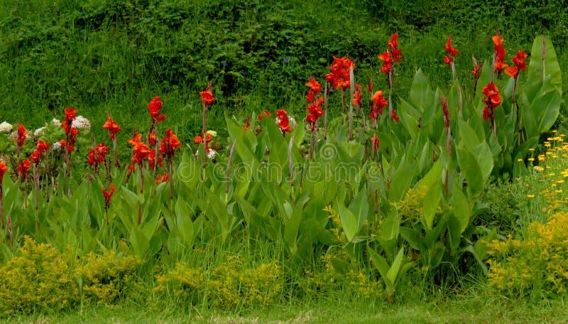 Ландшафт парка холма kodaikanal chettiar стоковое фото rf