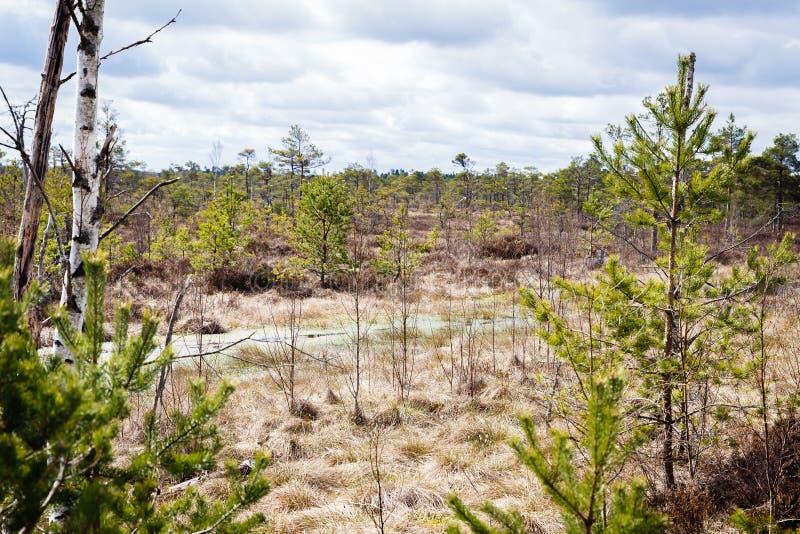 Ландшафт пасмурного болота дня видимый с малыми деревьями близко и далеко стоковая фотография
