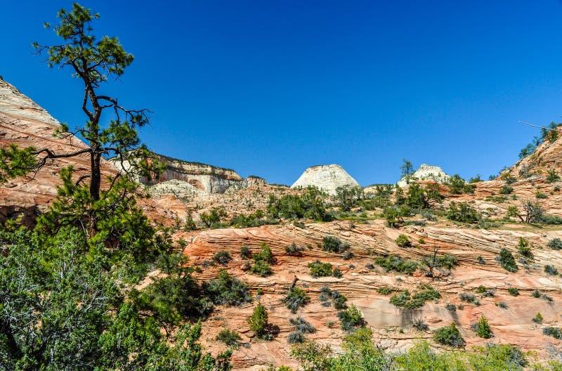Ландшафт песчаника национального парка Сион стоковые изображения rf