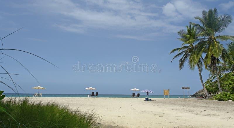 Ландшафт пляжа с ладонью стоковые изображения rf