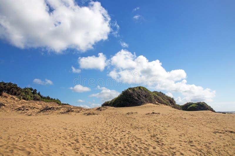 Ландшафт пляжа Mtunzini прибрежный в Южной Африке стоковое фото rf