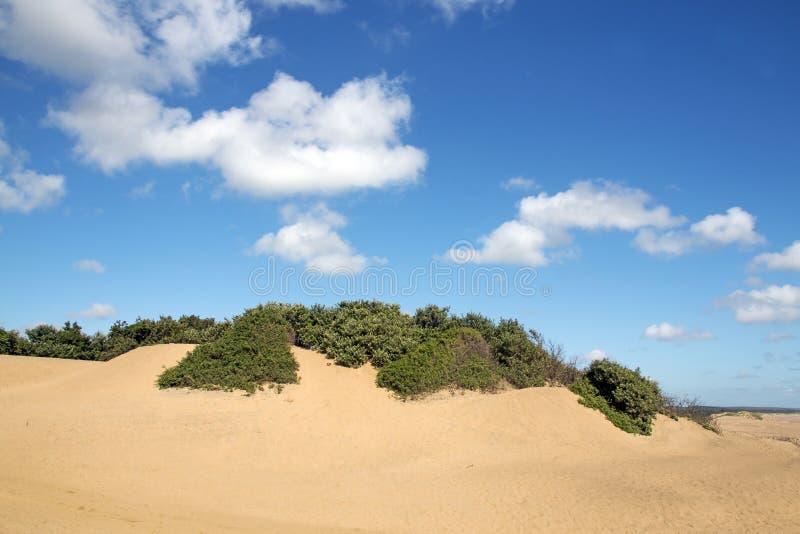 Ландшафт пляжа Mtunzini прибрежный в Южной Африке стоковое изображение rf