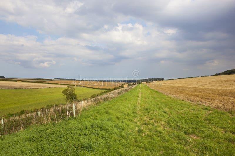 Ландшафт поздним летом стоковое изображение
