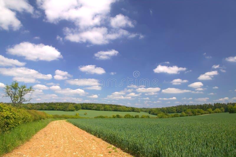 ландшафт поля края стоковые изображения rf