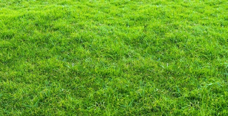 Ландшафт поля травы в зеленой пользе общественного парка как естественная предпосылка или фон Текстура зеленой травы от поля иллюстрация штока