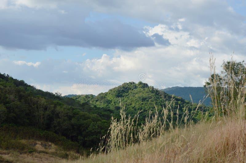 Ландшафт поля цветка травы дуя от ветра на горе Khao Lon в Таиланде стоковая фотография rf
