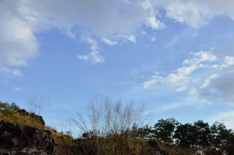 Ландшафт поля цветка травы дуя от ветра на горе Khao Lon в Таиланде стоковые изображения rf