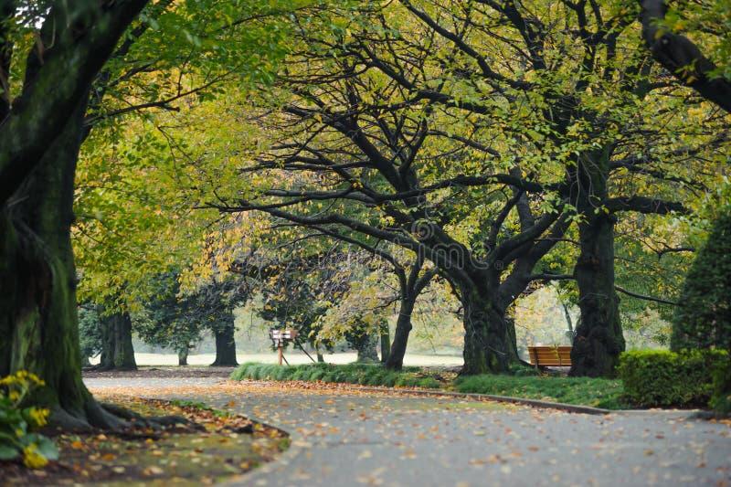 Ландшафт природы деревьев осени в токио Японии парка shinjuku стоковая фотография rf