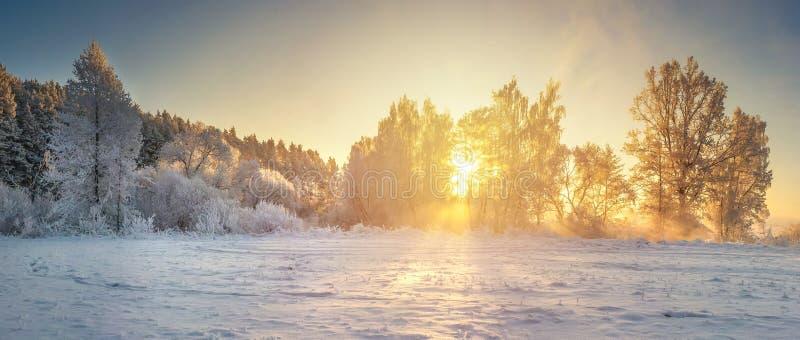 Ландшафт природы зимы Сцена зимы утра Панорама с морозными деревьями в солнечном свете Солнечные лучи через снежные деревья стоковое фото