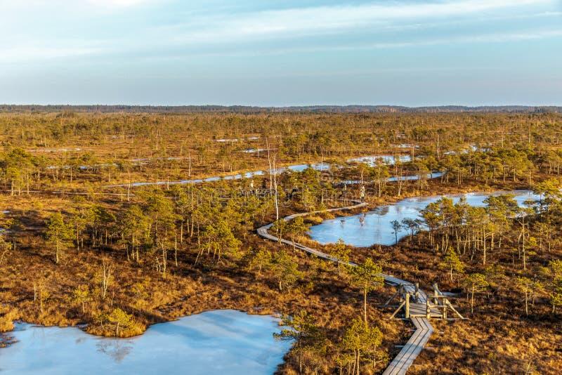 Ландшафт природы с ледяным холодным болотом с морозной землей, льдом на озере болота, деревянной тропой и плохой растительностью  стоковое изображение