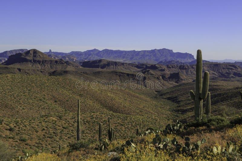 Ландшафт пустыни с какти Сагуаро стоковые изображения