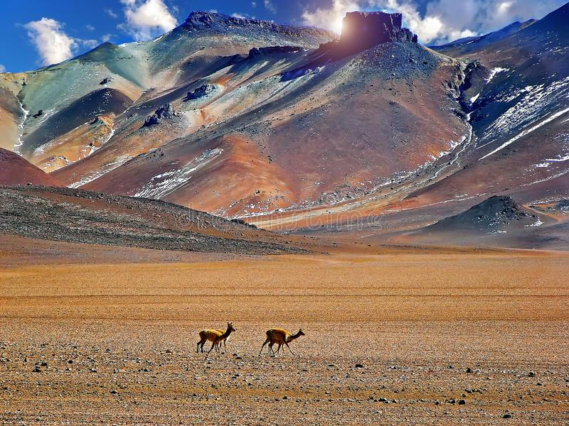 Ландшафт пустыни Dali, Боливия стоковое изображение rf