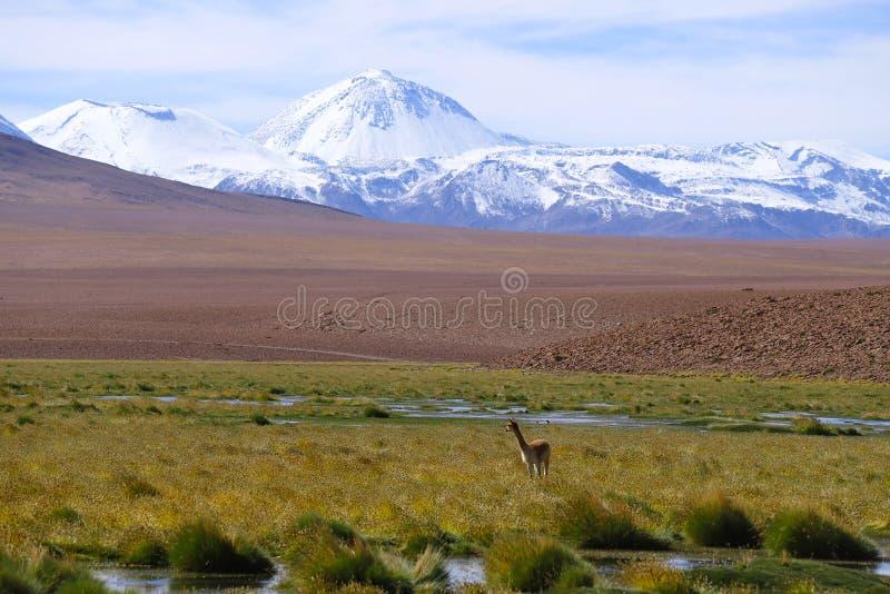 Ландшафт северной Чили с горами Анд и вулканами, пустыней Atacama, Чили стоковая фотография