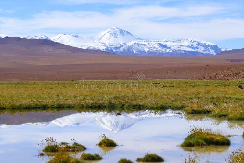 Ландшафт северной Чили с горами Анд и вулканами, пустыней Atacama, Чили стоковые фотографии rf